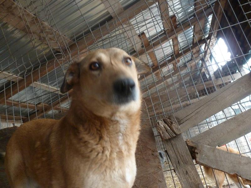BAILEYS, née en 2011, sauvée de l'équarrissage - parrainée par Nathalie -SOS-R-SC - Page 2 P1010145