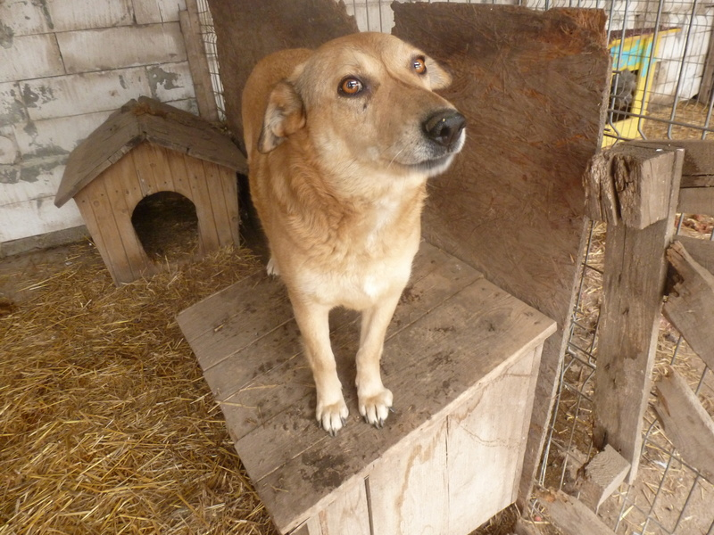 BAILEYS, née en 2011, sauvée de l'équarrissage - parrainée par Nathalie -SOS-R-SC - Page 2 P1010147