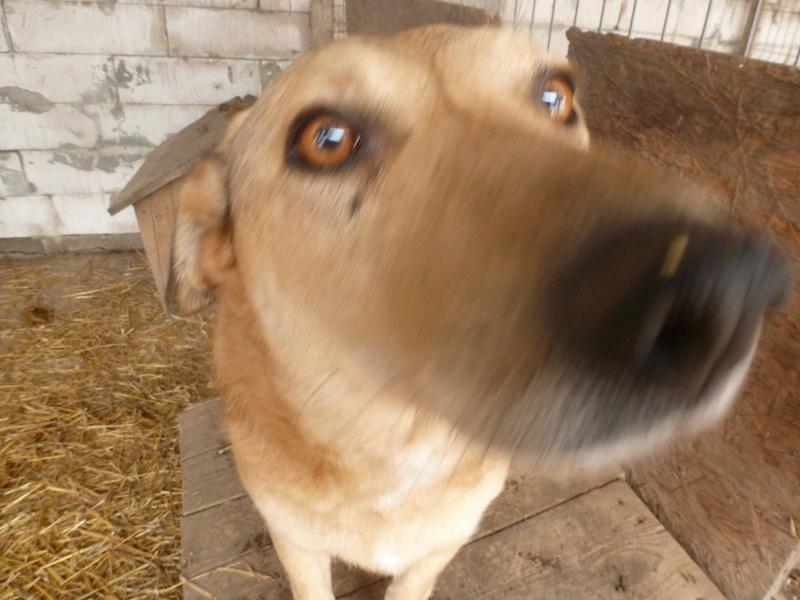 BAILEYS, née en 2011, sauvée de l'équarrissage - parrainée par Nathalie -SOS-R-SC - Page 2 P1010149
