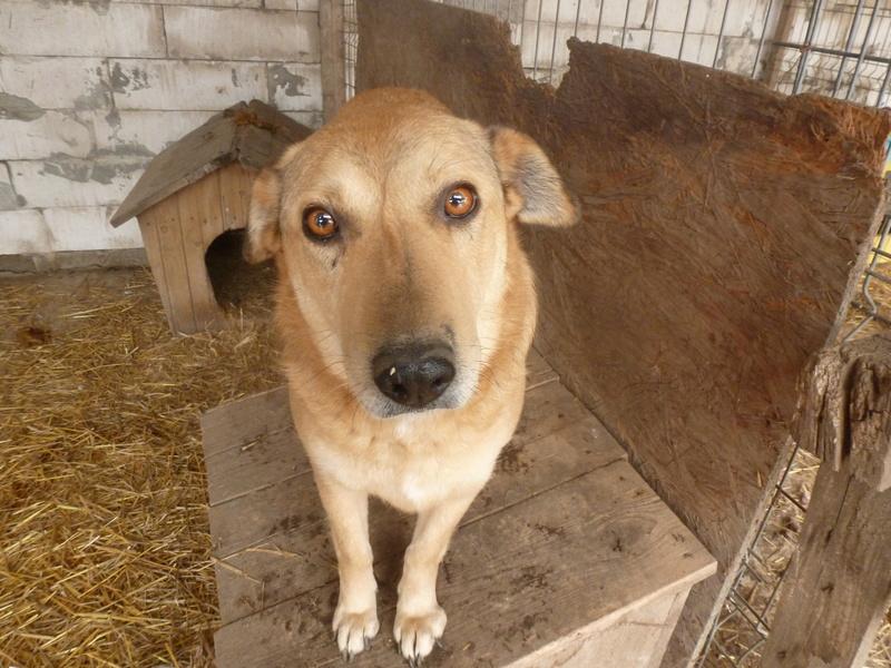 BAILEYS, née en 2011, sauvée de l'équarrissage - parrainée par Nathalie -SOS-R-SC - Page 2 P1010150