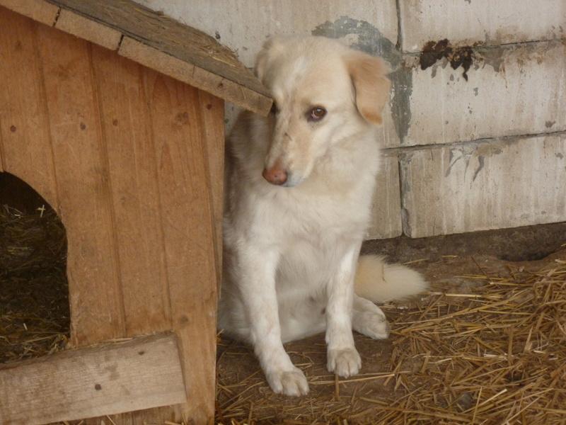 BALANUCH, mâle croisé berger sauvé de Pallady, né en 2009 parrainé par Nathalie G. -Gage Coeur  Myri_Bonnie-SC-R-SOS- P1010252