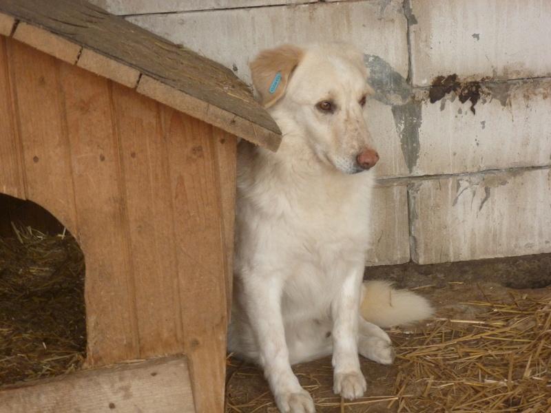BALANUCH, mâle croisé berger sauvé de Pallady, né en 2009 parrainé par Nathalie G. -Gage Coeur  Myri_Bonnie-SC-R-SOS- P1010253