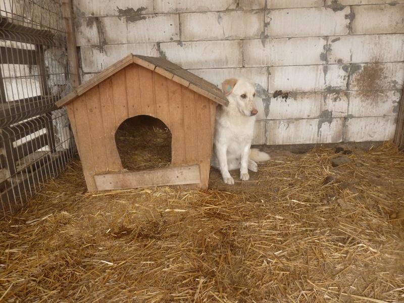 BALANUCH, mâle croisé berger sauvé de Pallady, né en 2009 parrainé par Nathalie G. -Gage Coeur  Myri_Bonnie-SC-R-SOS- P1010254