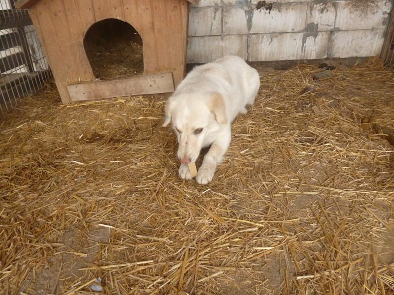 BALANUCH, mâle croisé berger sauvé de Pallady, né en 2009 parrainé par Nathalie Gamblin-Gage Coeur  Myri_Bonnie-SC-R-SOS- P1010255