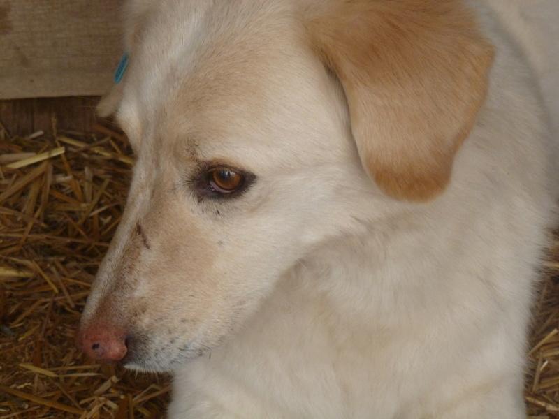 BALANUCH, mâle croisé berger sauvé de Pallady, né en 2009 parrainé par Nathalie Gamblin-Gage Coeur  Myri_Bonnie-SC-R-SOS- P1010260