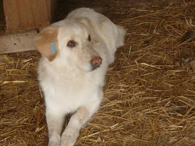 BALANUCH, mâle croisé berger sauvé de Pallady, né en 2009 parrainé par Nathalie Gamblin-Gage Coeur  Myri_Bonnie-SC-R-SOS- P1010263