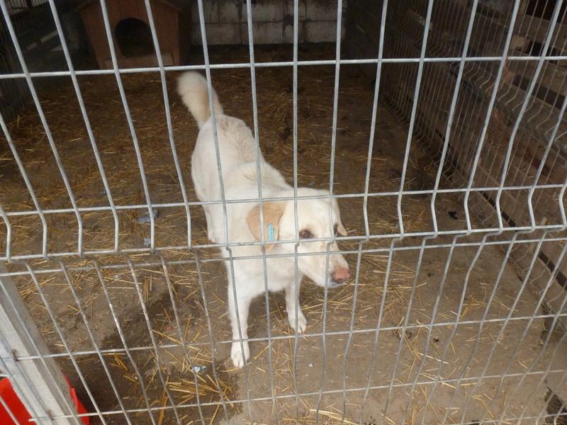 BALANUCH, mâle croisé berger sauvé de Pallady, né en 2009 parrainé par Nathalie G. -Gage Coeur  Myri_Bonnie-SC-R-SOS- P1010265