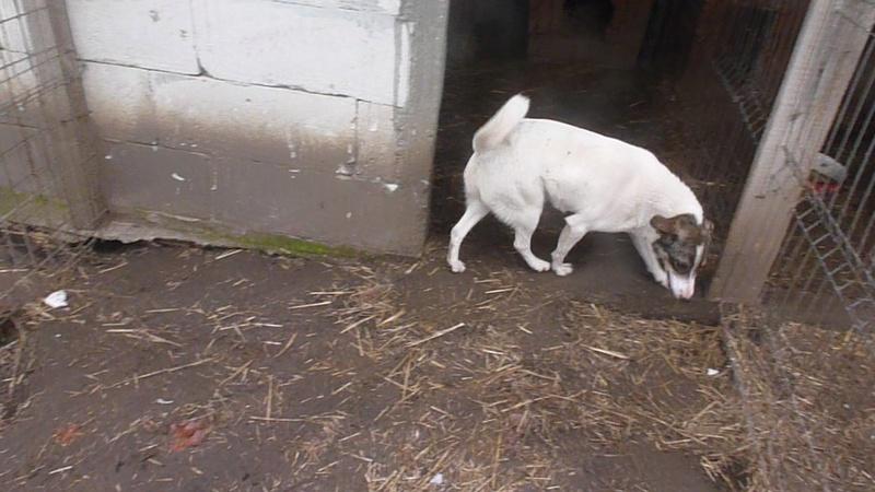 IRIS, née en 2015 - sauvée de la rue - Parrainée par Perdita -  OANA -SC-R-SOS- P1010427