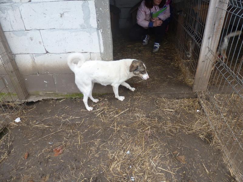 IRIS, née en 2015 - sauvée de la rue - Parrainée par Perdita -  OANA -SC-R-SOS- P1010430