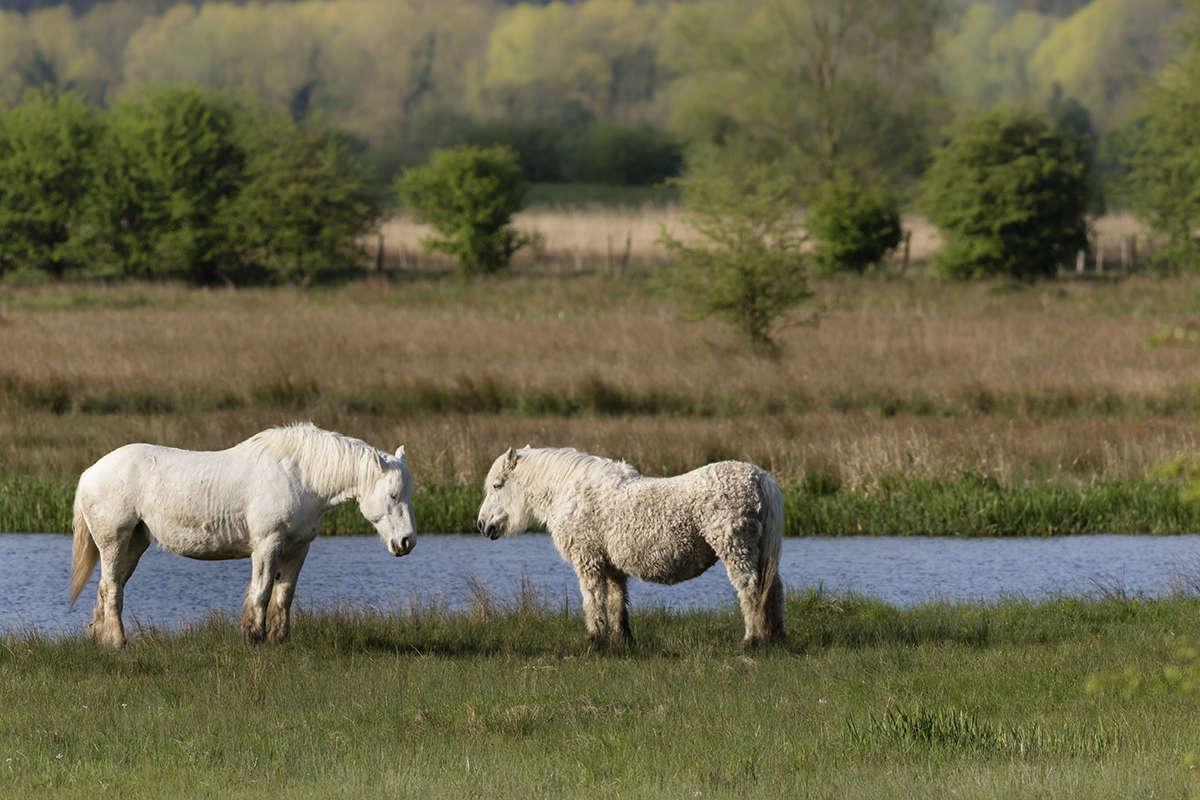 Paroles de chevaux Parole10