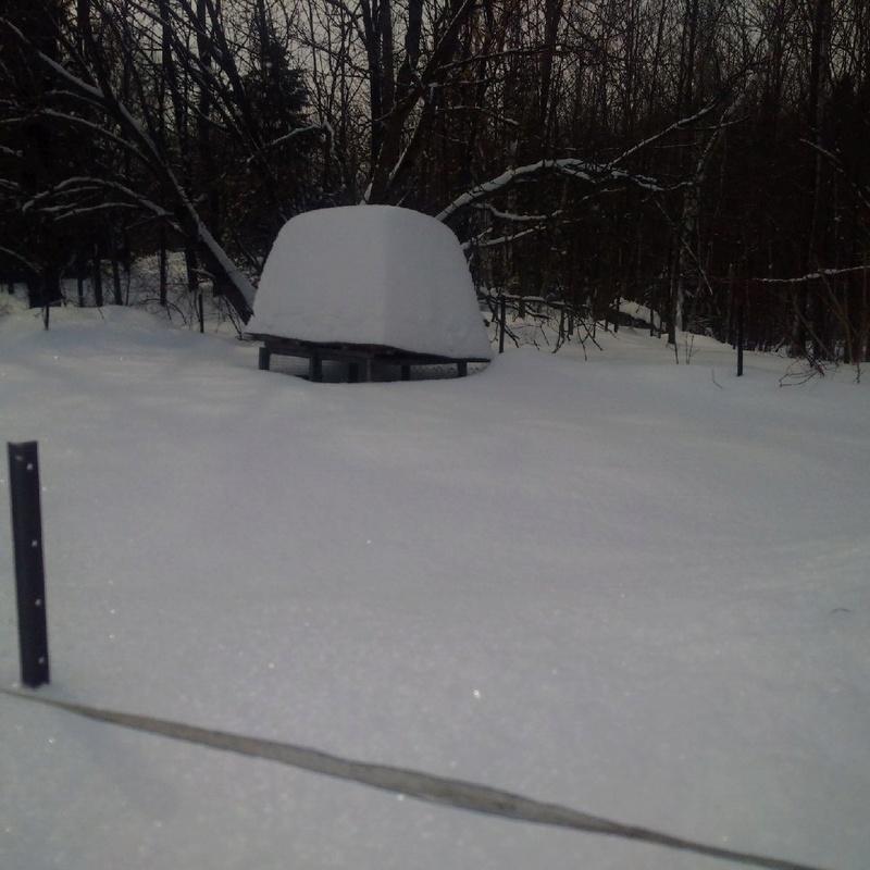 neige au 14 février 2017 (ici) Img_2010