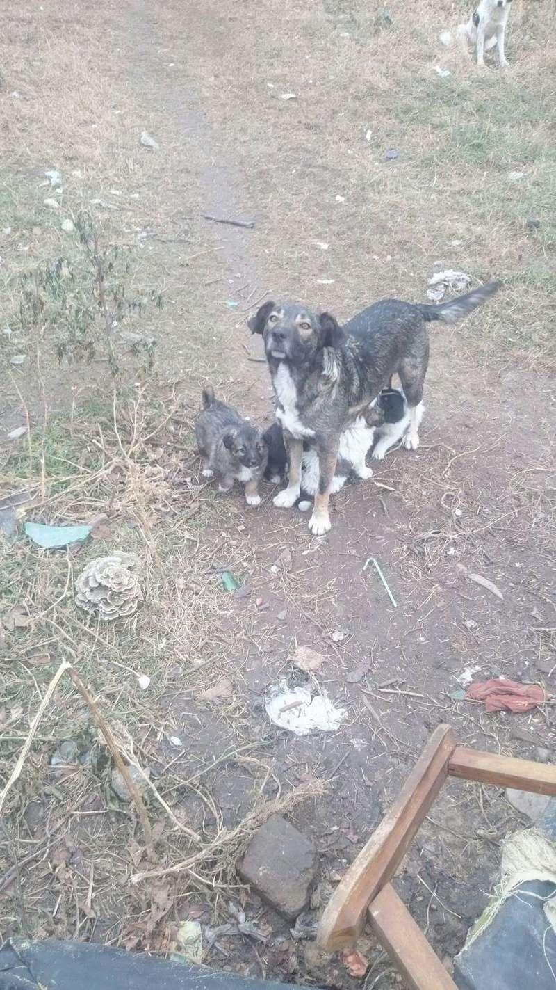 zina - ZINA - femelle croisée de taille moyenne, née octobre 2016 (Carmina Bucarest) - adoptée par Aline (56) Receiv13