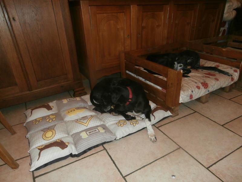 Carlos, galgo noir et un peu de blanc, 4 ans. Réservé - Page 2 P5010010