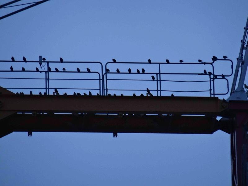 Ornithologie Dsc09121