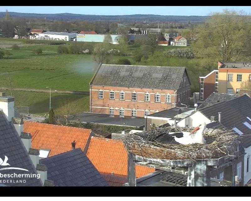 Webcam Cigogne blanche - vivara Photo_19