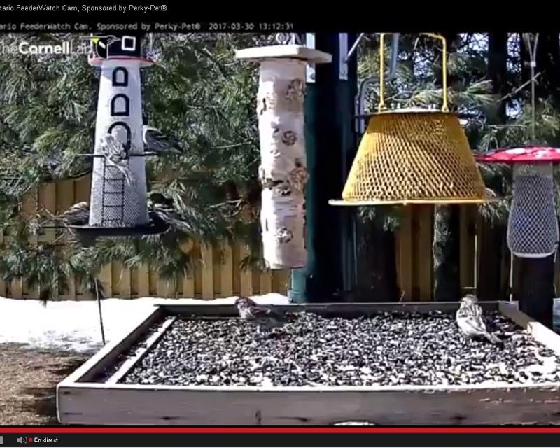 Webcam mangeoire Ontario Sans_t14