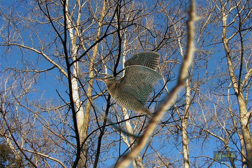 Influencia de las zonas de reserva de caza sobre la poblaciones invernantes de becada Becada12