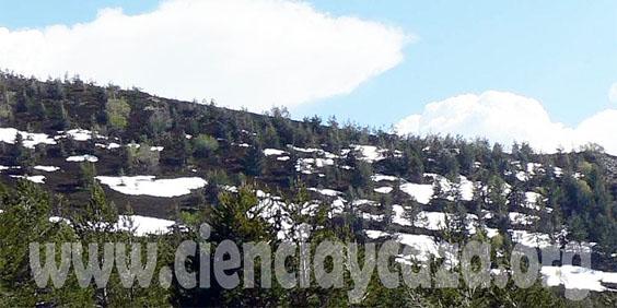 Influencia de las zonas de reserva de caza sobre la poblaciones invernantes de becada Sin_ty10