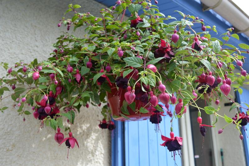 diverses fleurs 00413