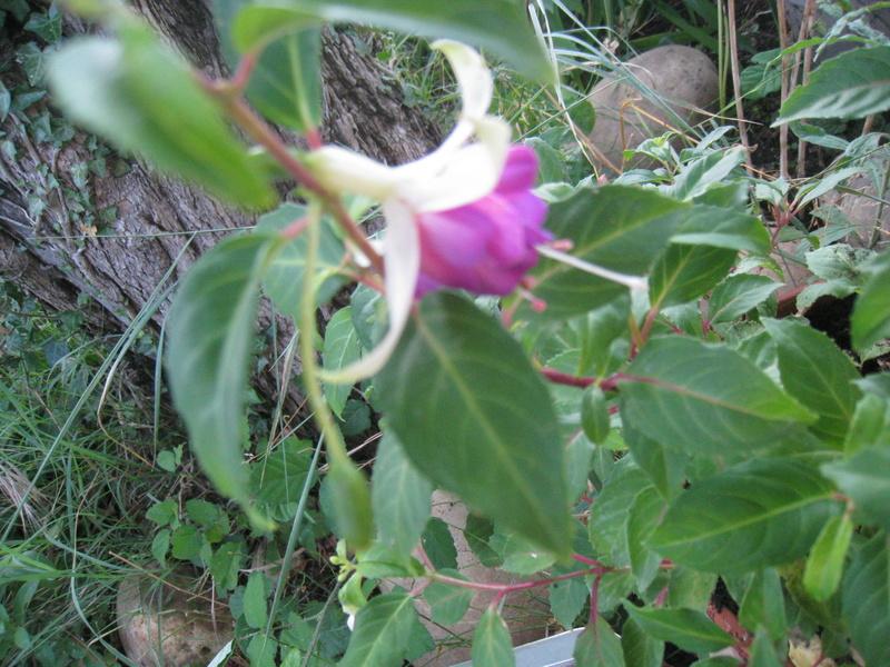 diverses fleurs 00415