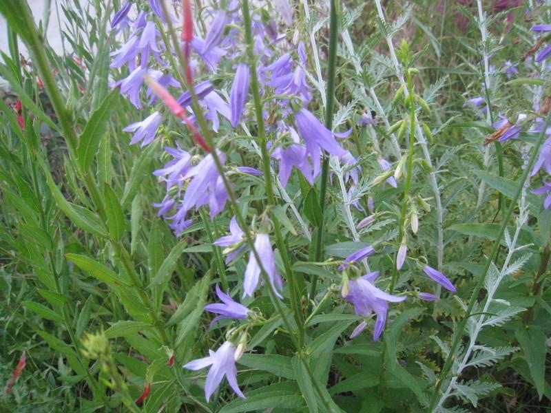 diverses fleurs 00513