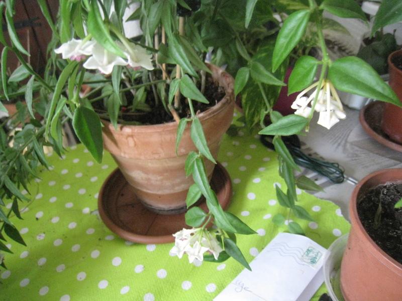 diverses fleurs 00514