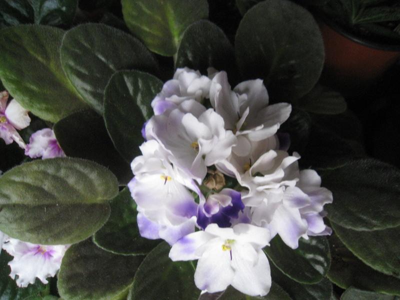 diverses fleurs 00611