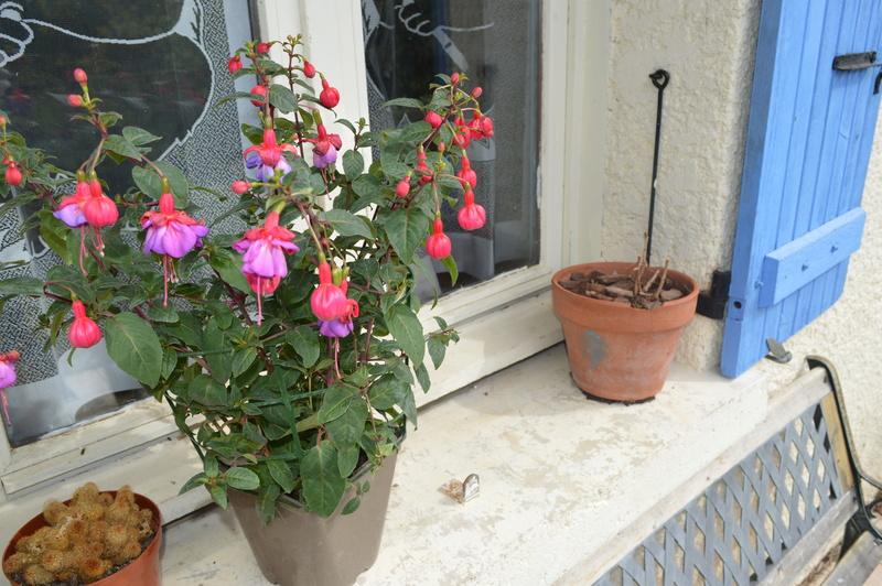 diverses fleurs 00710