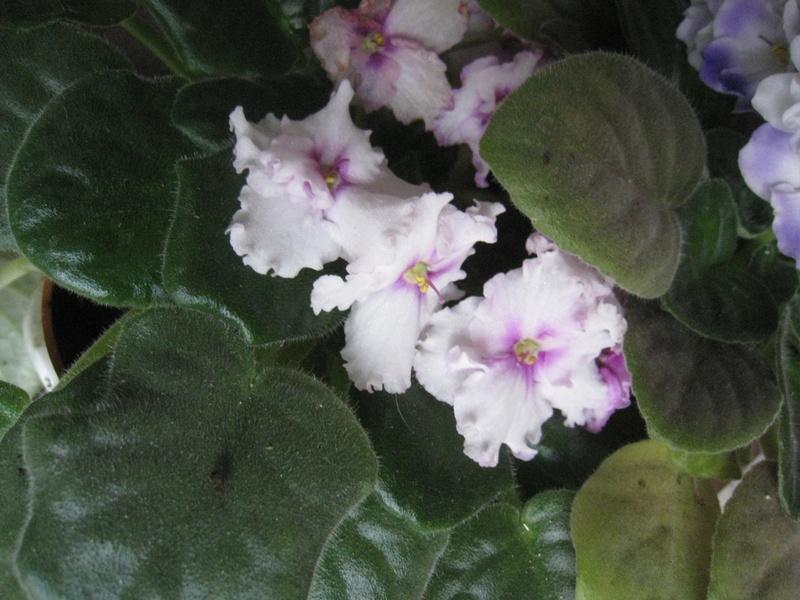 diverses fleurs 00712