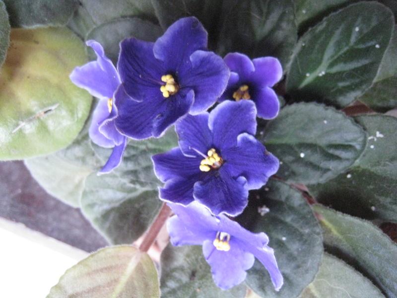 diverses fleurs 00812