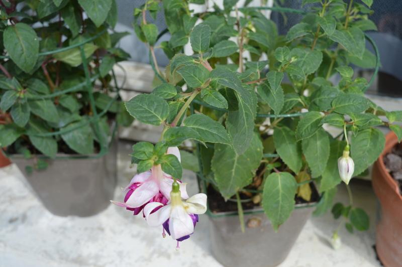 diverses fleurs 00911
