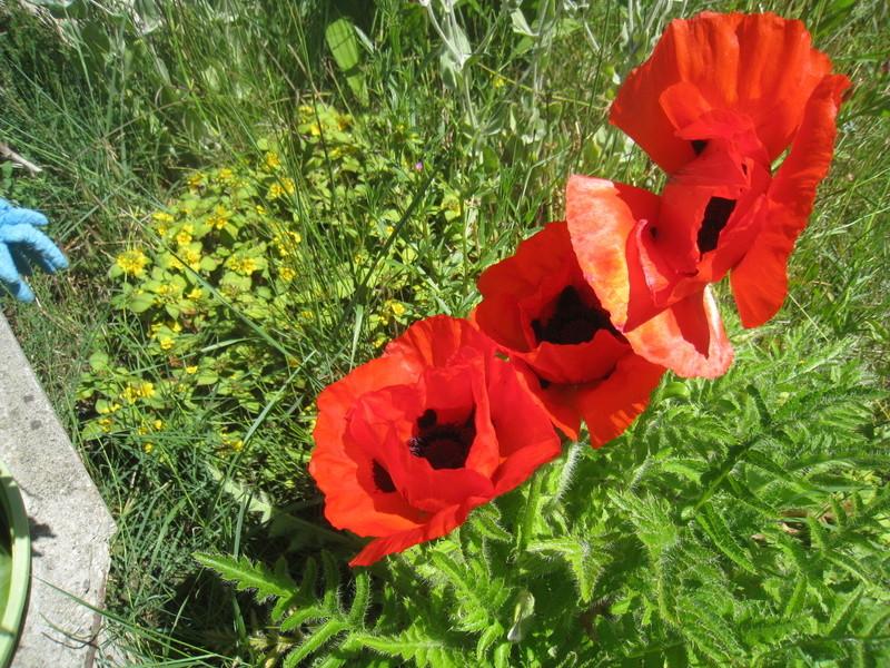 diverses fleurs 00912