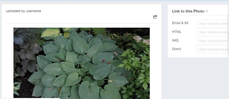 Guide d'identification: Hostas par photos (ancien) - Page 2 Photob10
