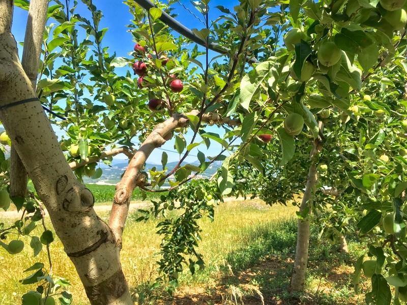 un petit renseignement pour ma pomme Image26