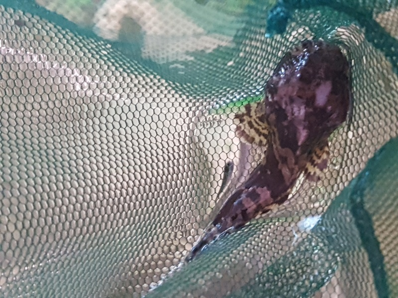 identification d'un poisson de fond 20170319