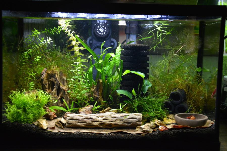 Petit aquarium 19 l pour crevettes Aqua-210