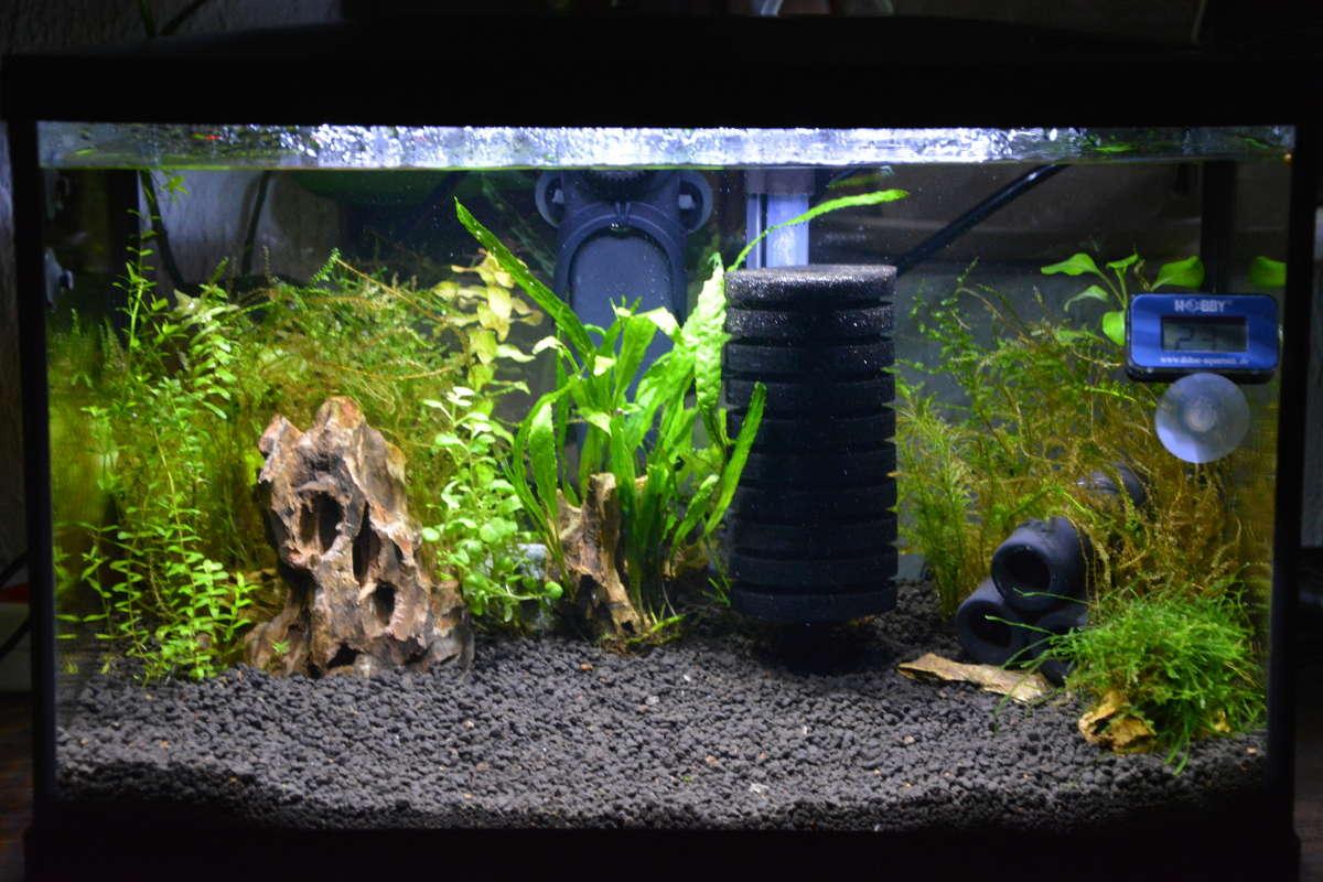 Petit aquarium 19 l pour crevettes Aqua-c10