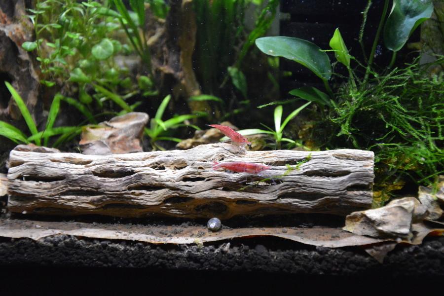 Petit aquarium 19 l pour crevettes Aqua-c11