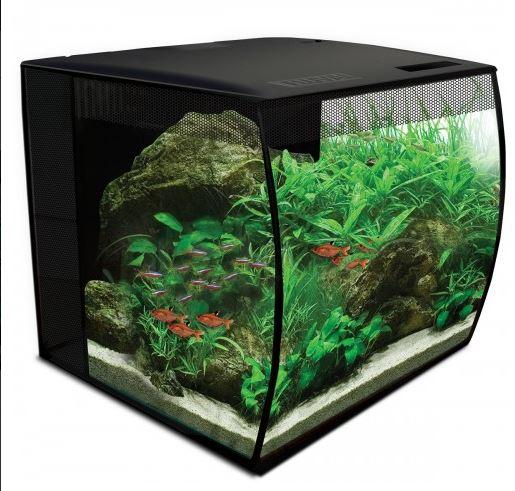 Futur aquarium pour Betta Aquari10
