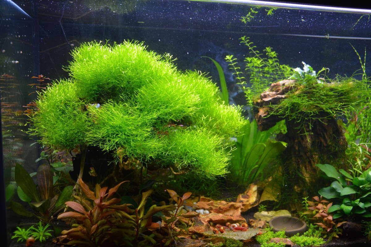 Petit aquarium 19 l pour crevettes Bonzai11