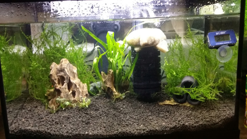 Petit aquarium 19 l pour crevettes Mise-e10