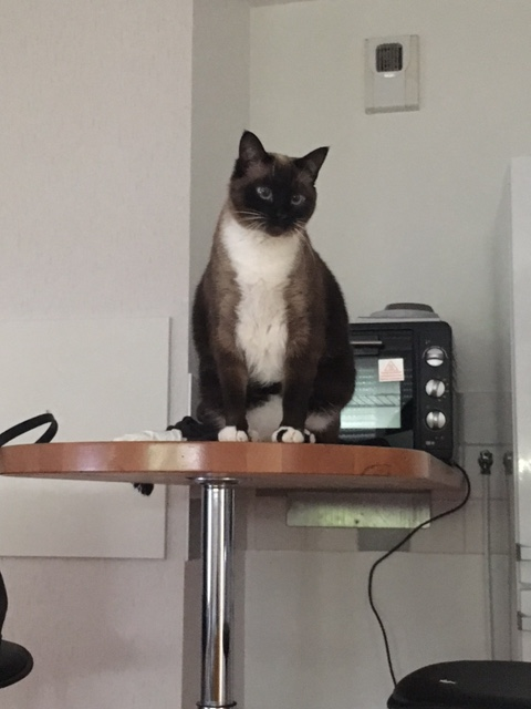 FLORETTE, chat de maison couleur chocolat,  née le 19 avril 2010. Img_1516