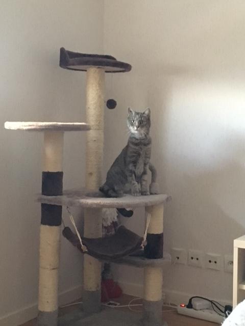 Peggy - PEGGY - Femelle européenne - tigrée grise - née fin 2012 Peggy10
