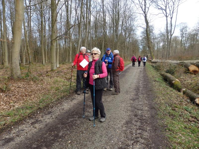 Mardi 7 mars : forêt verte 41-for19