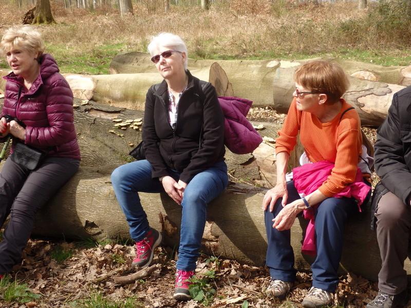 Forêt de Roumare : parcours de santé mercredi 29 mars 43-for11