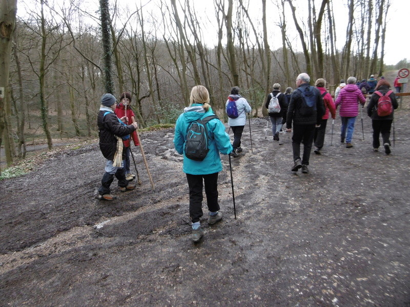 Mardi 7 mars : forêt verte P1000115