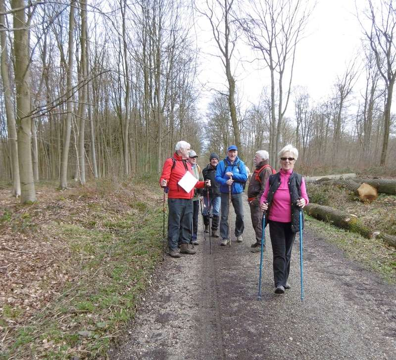 Mardi 7 mars : forêt verte P1000210