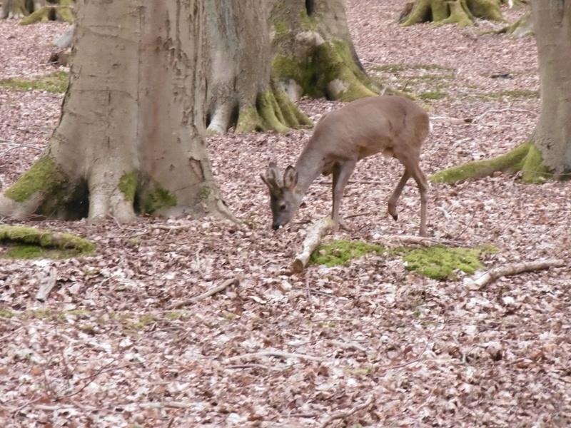 Forêt de Roumare : parcours de santé mercredi 29 mars P1000225