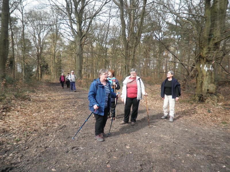 Mercredi 15 mars - Forêt de Roumare P1010418