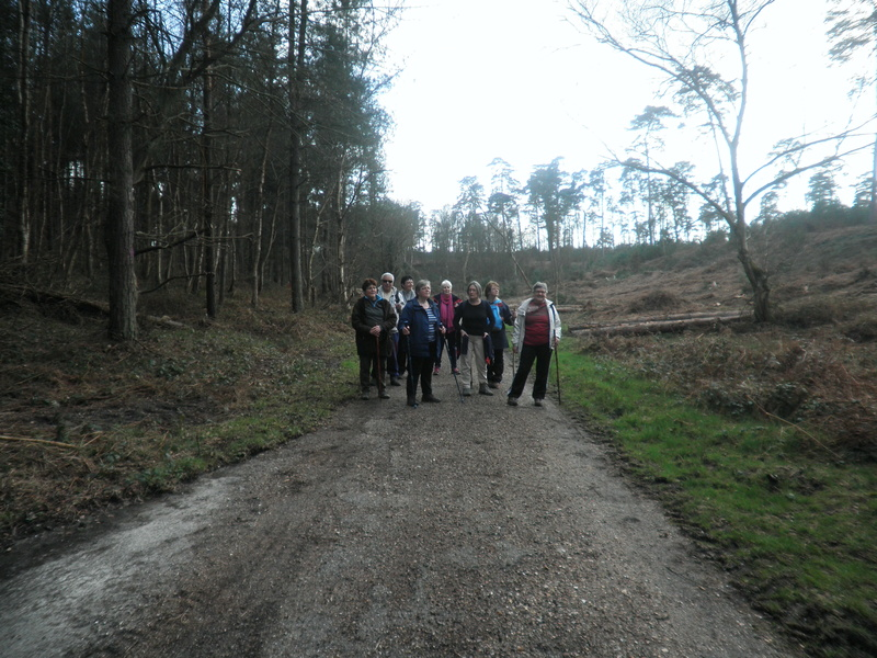 Mercredi 15 mars - Forêt de Roumare P1010419
